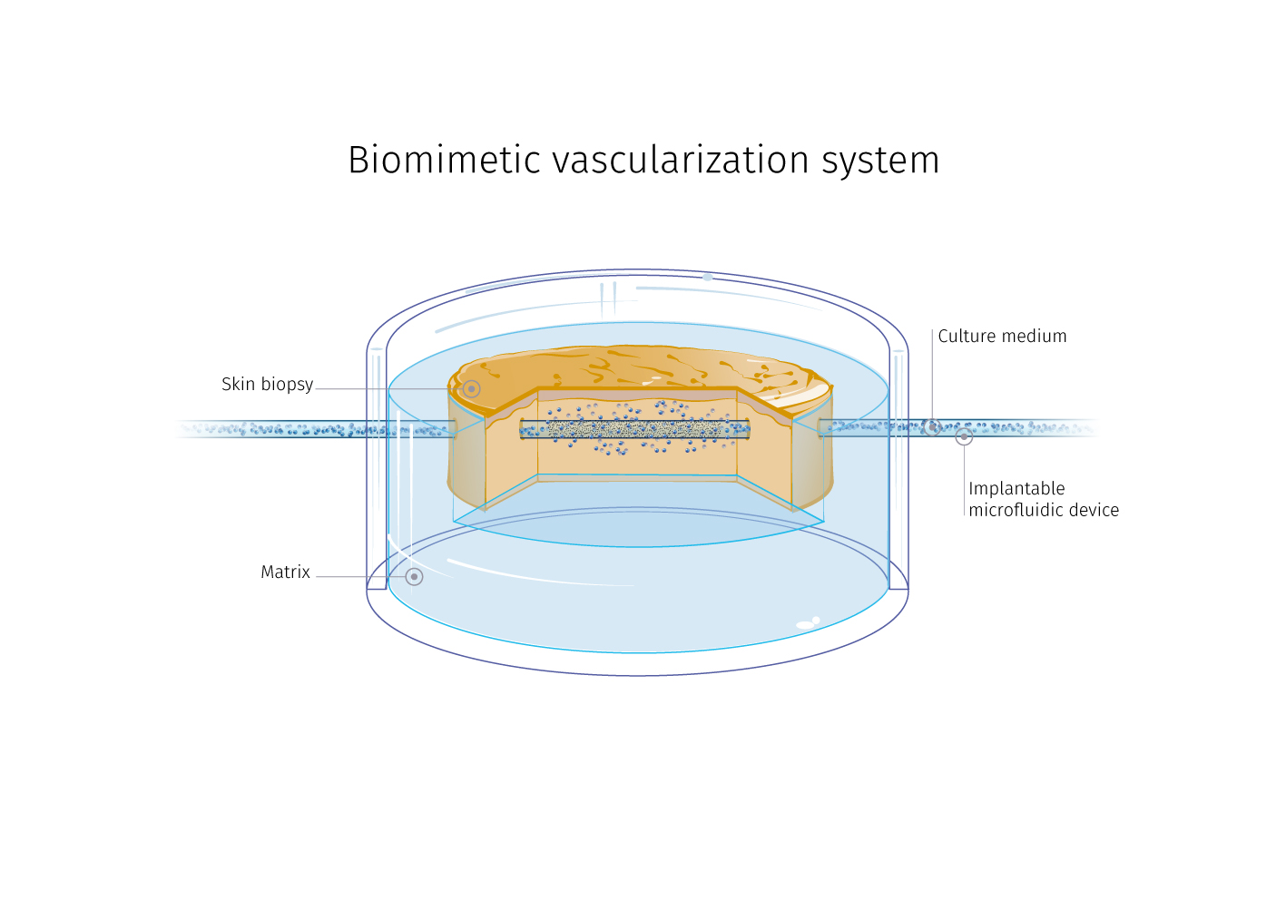 Flowskin® a perfused ex-vivo human skin model ready to test pharmacokinetic