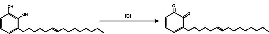 Urushiol activation upon oxidation